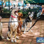 Southern California's Dog-Friendly Parks & Beaches